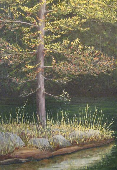 Pine on the point
